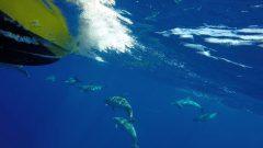 Delfine unter dem Speedy