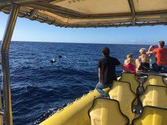 Gäste des Speedys bestaunen Pilotwale