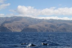 Delfine vor der zerklüfteten Küste Gomeras