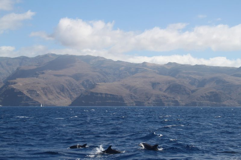 Dolphins off the rugged coast of La Gomera