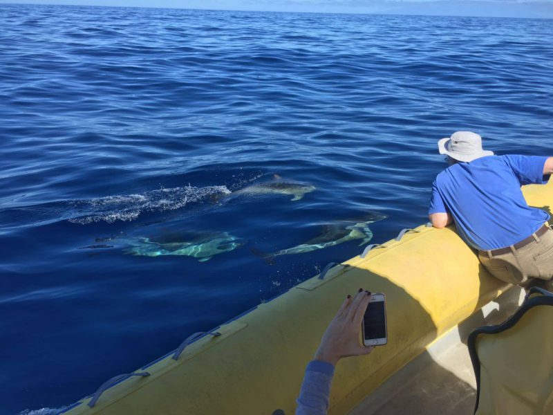Gemeine Delfine dicht am Boot